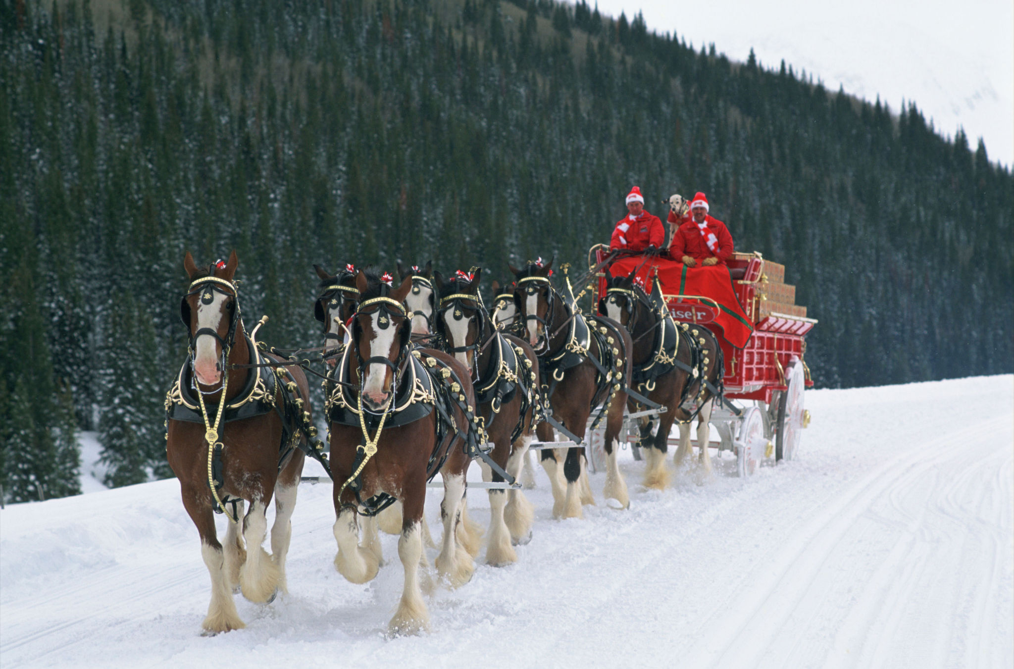 budweiser clydesdalesBudweiser Clydesdales In Snow
