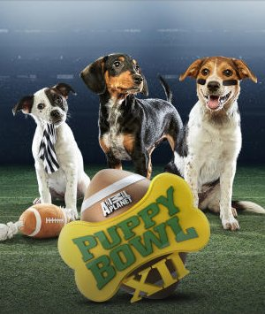 animal planet puppy bowl xii-2016